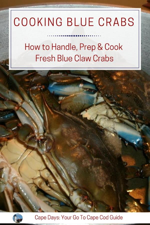 Guide to handling, preparing and cooking freshly caught blue claw crabs
