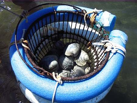 floating basket of clam
