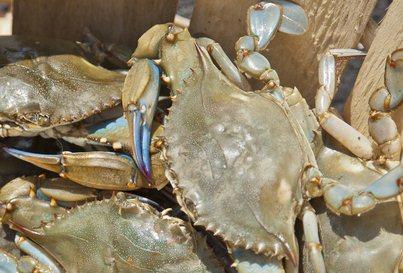 Basket of crabs