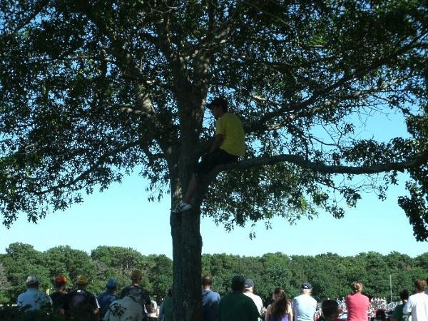 Baseball fan sitting in tree watching the game