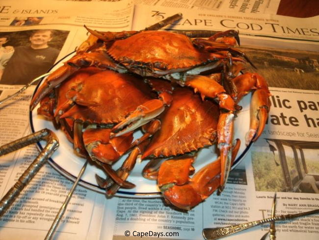 Plate of freshly steamed blue crabs