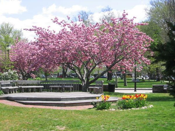 Spring flowers and trees in bloom on Cape Cod