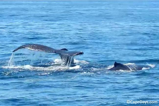 Whale sightings on a whale watch cruise