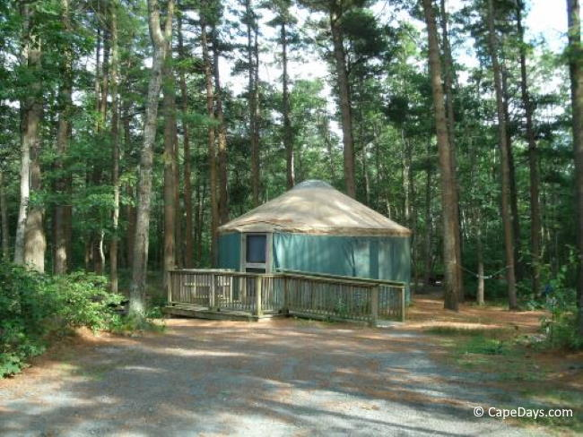 Yurt in a wooded area
